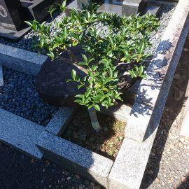 お墓への植栽について思う。